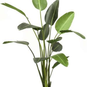 Artificial Strelitzia 190cm