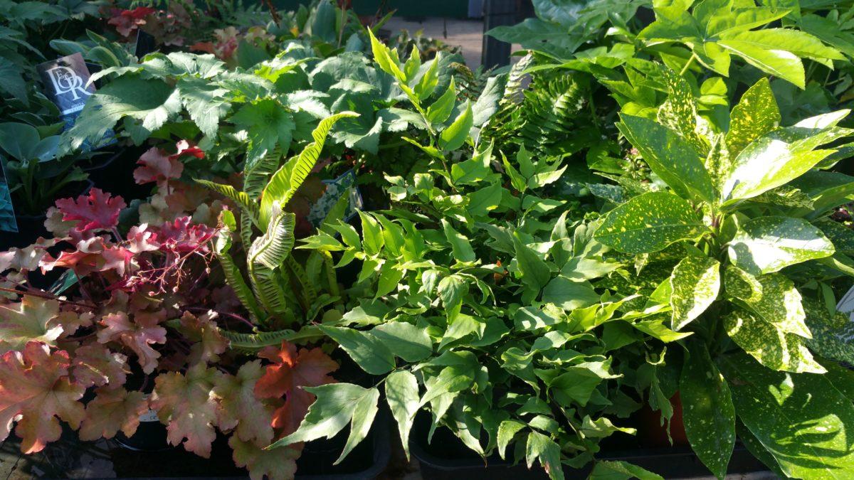 Urban Plant Life Dublin S Only City Centre Garden Centre