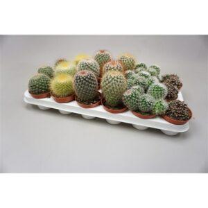 Cactus bol mix