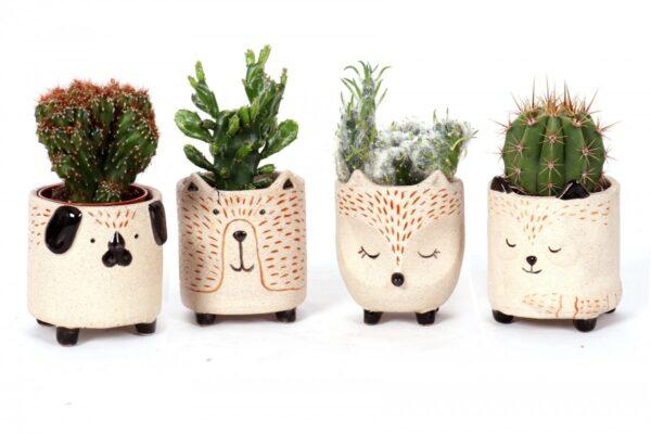 Cactus mix sleeping animals ceramic