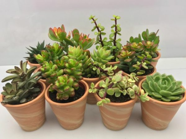 Succulent mixed terracotta