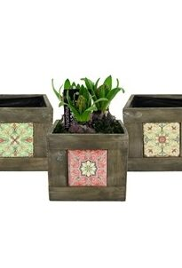 HYACINTH 3 PER WOODEN BOX WITH TILE