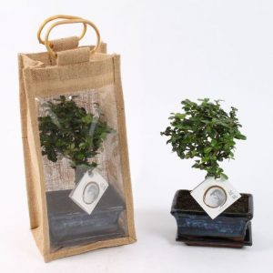Bonsai Mix in 15cm Ceramic Pot with Saucer in Jute Gift Bag