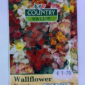 Wallflower Monarch Fair Lady Seeds