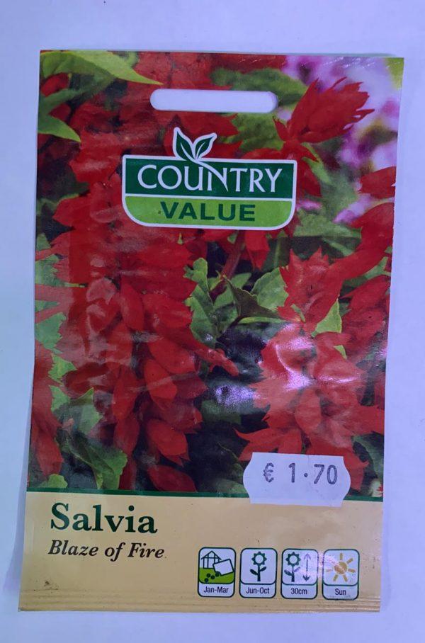 Salvia Blaze Of Fire Seeds