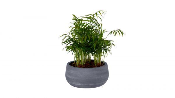 bowl_com_planta-2