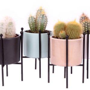 Cactus mix ceramic pot legs