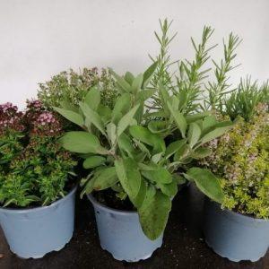 Aromatic herb mix
