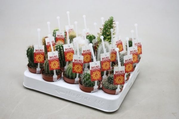 Cactus mix with label and picker
