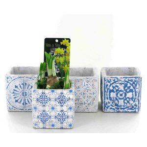 Narcissus 'Tete-a-Tete' in square ceramic pot