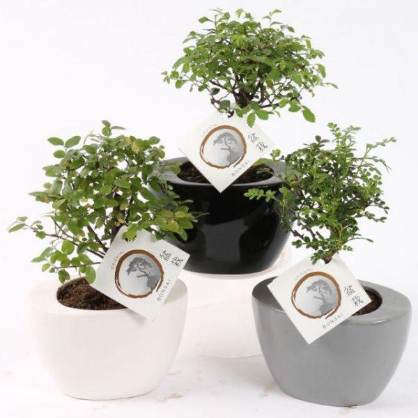 Bonsai folded pot