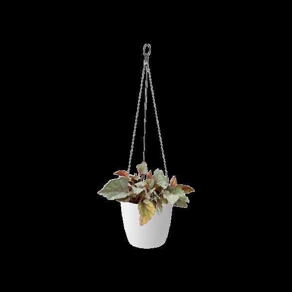 Elho brussels hanging basket white