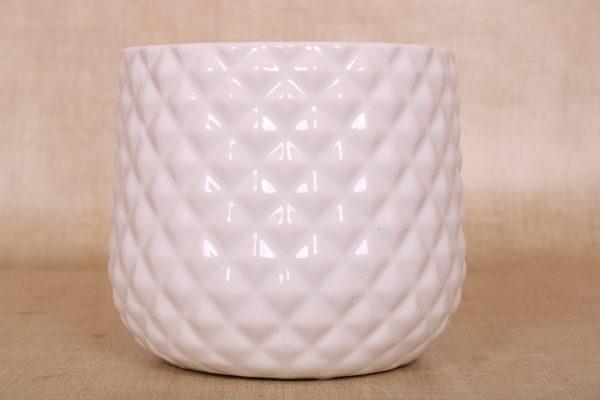 K.12cm(x06)062198 palm white