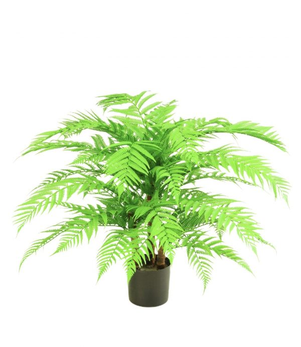 Alsophila W-Tree