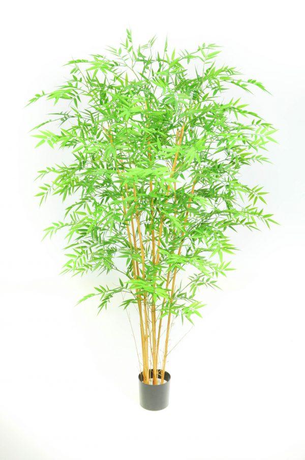 Bamboo Japanese Style