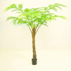 Alsophila Palm Tree 2