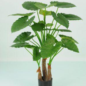 Alocasia Calidora Palm