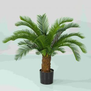 Baby Cycus Palm