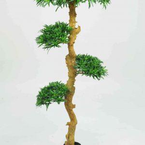 Bonsai Wood Tree