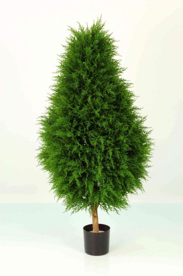 Cypress Cone