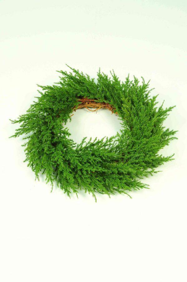 Wreath Cypress