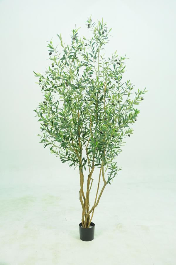 X-Olive Tree