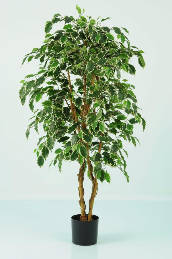 Artificial Ficus Variegated