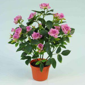 Mini Lilac Rose