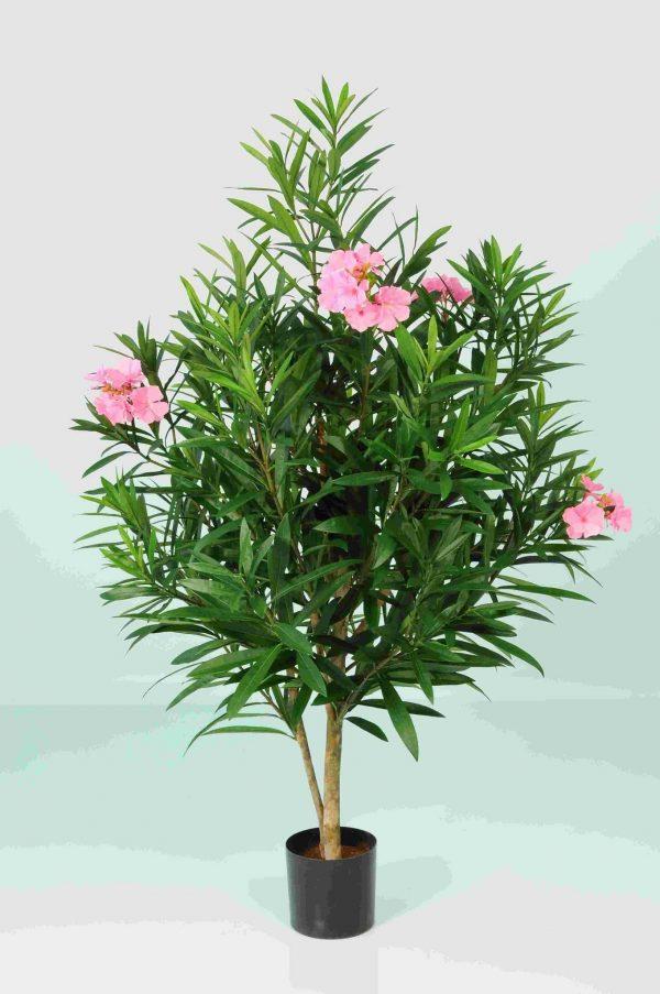 Oleander Body