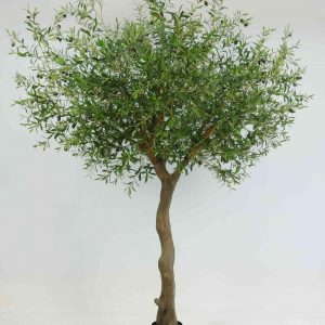 Olive Natural Tree