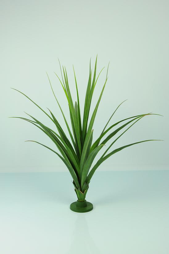 Pandanus Base Plant