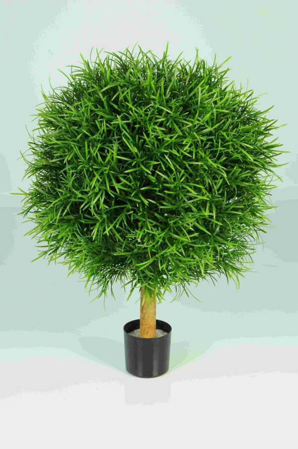 Podocarpus Ball