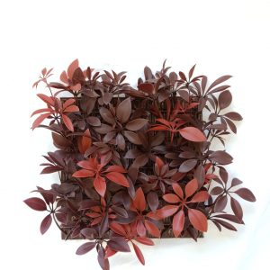 Red Schefflera Tile