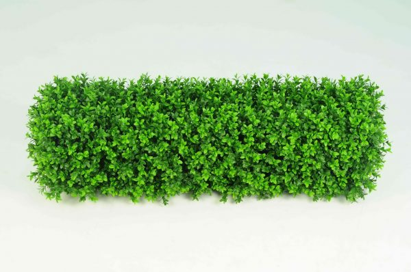 Boxwood Hedge Small
