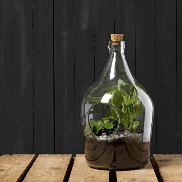 Open terrarium bottle 5 litre 2